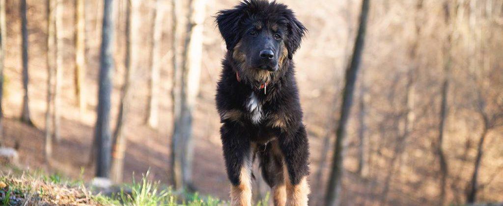 franklin-dog-training